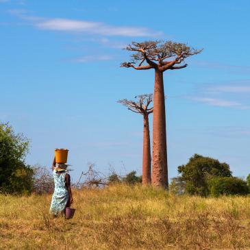 Flight to Madagascar